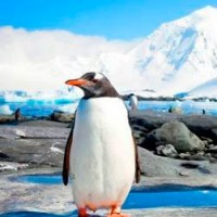 antarctida1