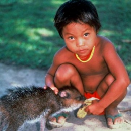 suriname indian boy