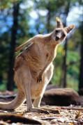 8_Australia